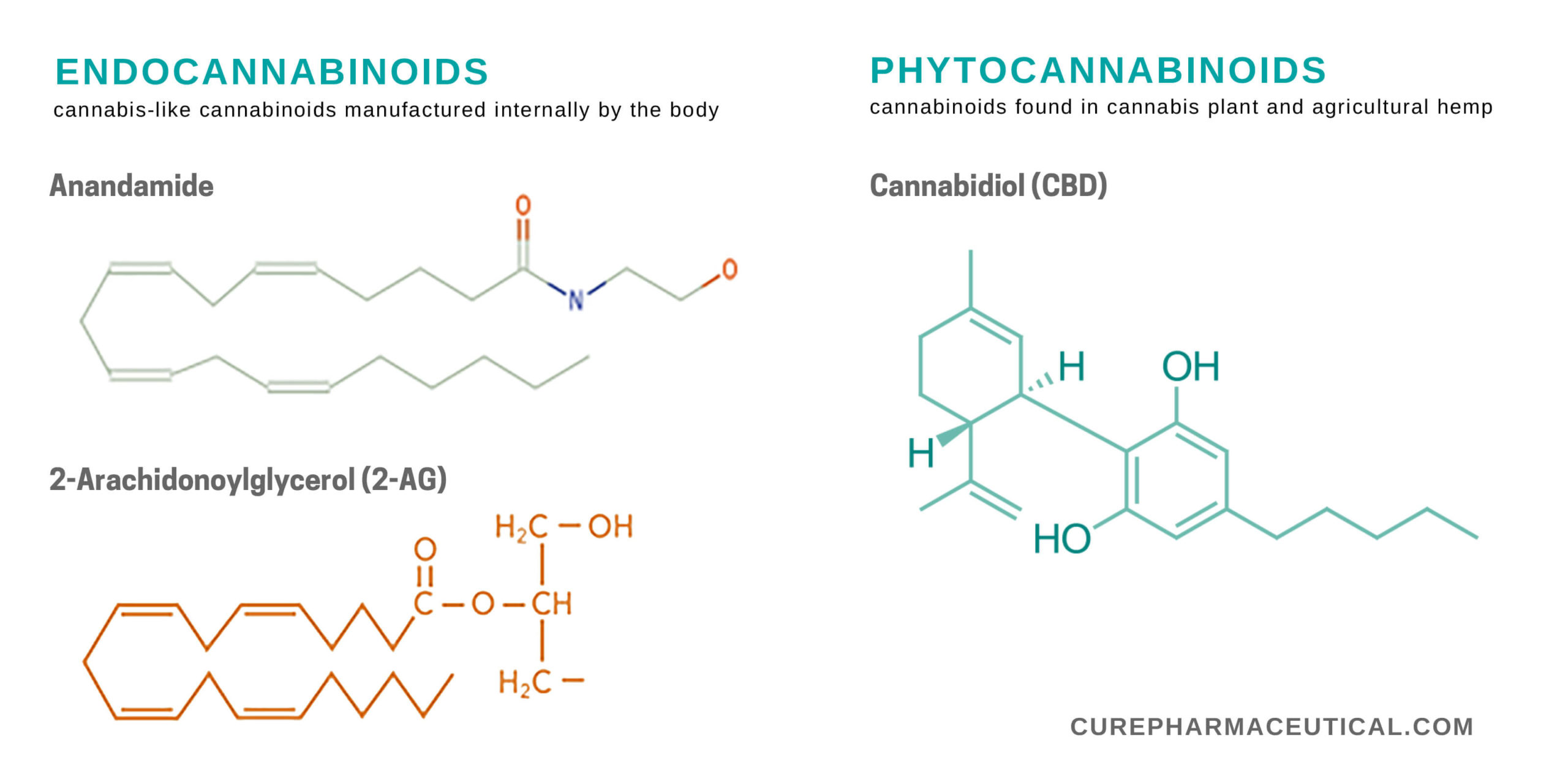 The Role of the Endocannabinoid System in the Human Body